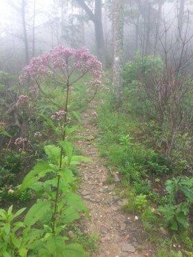 Linville Gorge ~ Mountains to Sea Trail ~ North Carolina