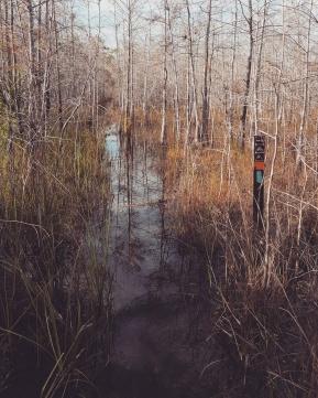 Original southern terminus ~ Florida Trail ~ Loop Road