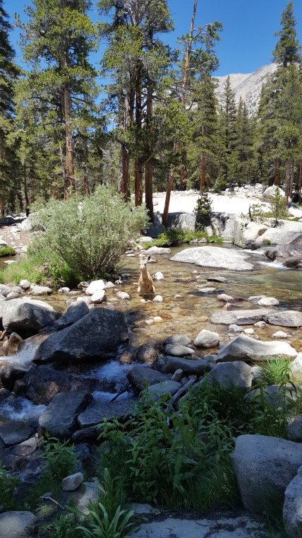 Yep...one good reason to filter your water...we had just crossed this creek and had filtered some water for ourselves when she came along!