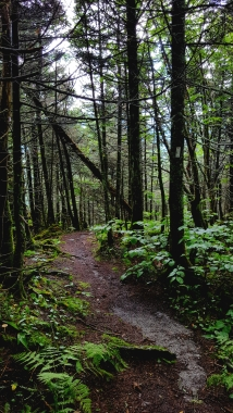 Trail north of Laura Woodward Shelter