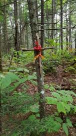 Cross near the trail