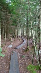 Heading toward Big Branch Wilderness