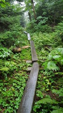 Trail north of Tillotson Camp