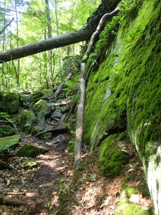 Approaching Ritterbush Overlook