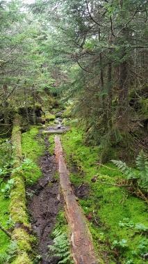 Loving the Long Trail!