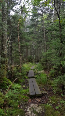 Trail north of Sterling Pond Shelter