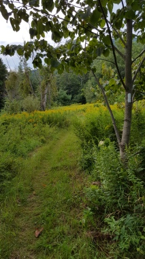 South of VT 2 Section of newer re-routed trail
