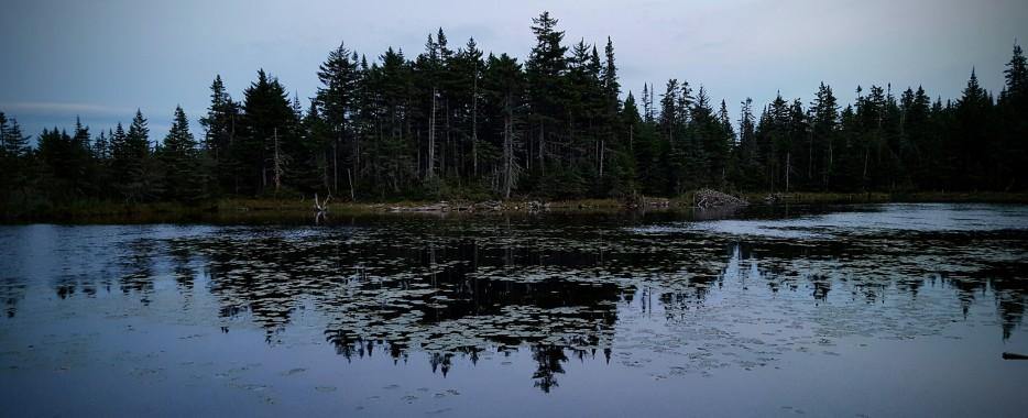 Skyline Pond