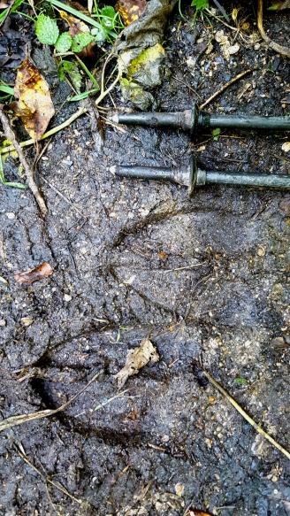 Moose tracks Brandon Gap