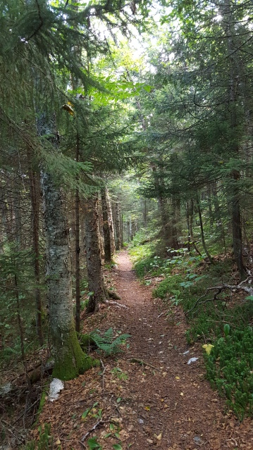 Bloodroot Gap ~ Long Trail ~ Vermont