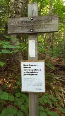 Danger...Prickly Porcupines