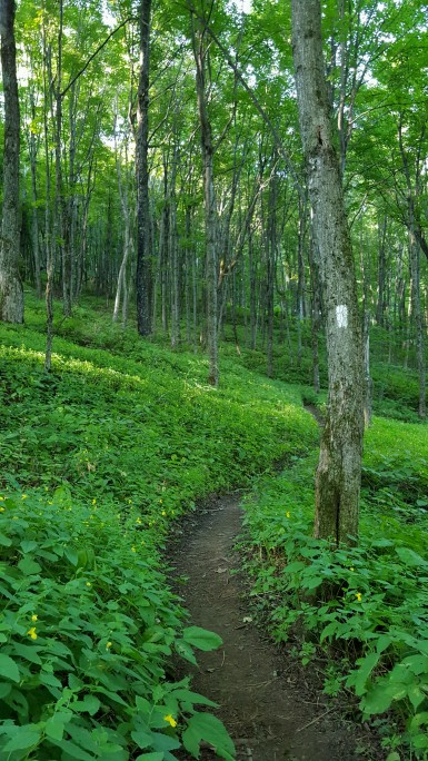 Hiking through jewelweed LT/AT