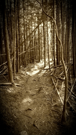 Beautiful forest Near Clarendon Shelter