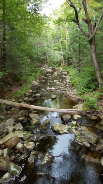 Lye Brook Wilderness Brook just south of Prospect Rock