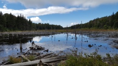 Another beautiful view of the beaver pond